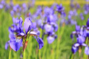 flower-76336_1920