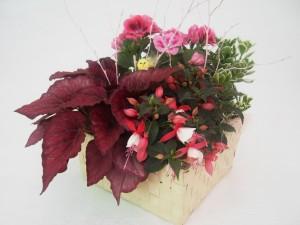 3 composizioni fiori pasqua 2016