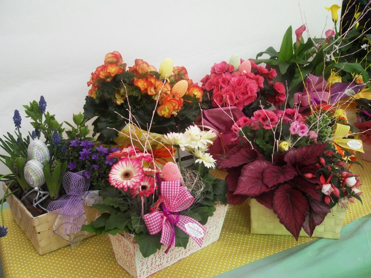 5 composizioni fiori pasqua 2016 azienda vivaistica - Piante regalo ...