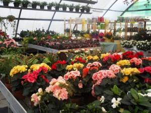 7 composizioni fiori pasqua 2016